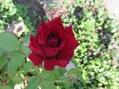 今日の庭から(~秋の気配~)