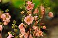 植物図鑑73種に写真を追加しました2018.8.22(ア~サ行)