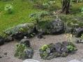 雨上がりの苔庭