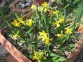 黄色い花達
