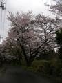 畑で咲いてるクリロもまだまだ咲いてる。