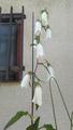 5月25日の花