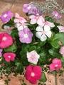 お花の手入れ🤗