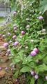 今朝の花壇は水切れ😱