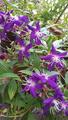 ふくおかルーバルガーデン3~初秋の庭へ🎑❗コガネムシの幼虫と戦って😠