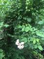 プチ・ジャングル