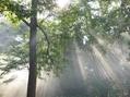 天使の梯子と雨上がりの庭