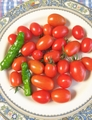 ミニトマト収穫🍅まだまだなります😏