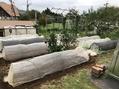 野菜🥦 の植え付けと種まき