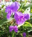今日の💜紫の花