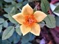 早朝に見付けた花