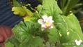 今日のお花(^_-)-☆