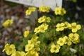 ベルギーの植物園4月・その2