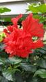ふくおかルーバルガーデン2~秋の庭🎑へ❗植物園の花達に合えました💠