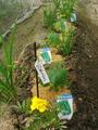 収穫と定植