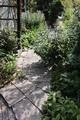 日陰ガーデンのお掃除