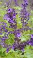 ふくおかルーバルガーデン2~秋の庭🎑へ❗植物園で出会えた花💠4~
