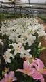 サルビアとケイトウの花絵を見に行きました( ̄▽ ̄)ノ″