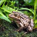 天高く蛙肥ゆる秋