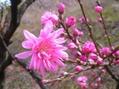 桜には少し早かった。[i:140]