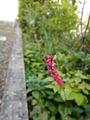 家の周りの小さな花たち😊