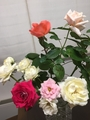 バラを育て始めて劇的に変わった事。3個