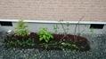 庭木の植え替え作業