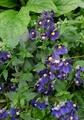 いろいろな紫
