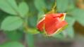 ふくおかルーバルガーデン2~秋の庭🍂便り❗今夜は十六夜🎑