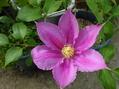 今年の初開花は・・・