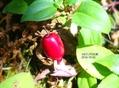 紅葉の中  栂池高原 10-02