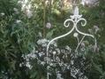 ふわふわのお花達