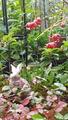 ふくおかルーバルガーデン2~秋の庭🍂便り❗昨夜からの雨は上がりましたが台風🌀が➰