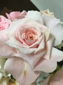 テーブルのバラ、花開き。