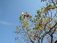 落花生の収穫です
