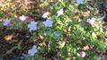 鉢植えから花壇へ~😊~