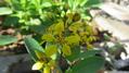 鉢植えから花壇へ~😊~その2