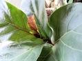 熱帯植物に四季は無い[i:159]