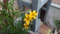 今日の花たちの様子