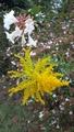 ふくおかルーバルガーデン2~秋の庭🍂便り❗久し振りにカモさんに会えました🐦
