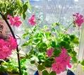 函館から運んで来た花たち