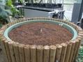 芽がでました!ショクダイオオコンニャク