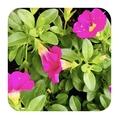 我が家の小さな庭の花💐