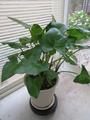 復活した我が家の植物たち。。