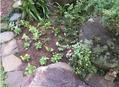 💮バンジー.ビオラ専用花壇