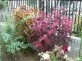 秋のコリウス(*^^*)