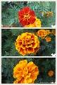 ワンコの散歩で見つけたお花(^_-)-☆