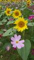 ふくおかルーバルガーデン2~秋の庭便り🍂❗日々好日のお天気模様🍁