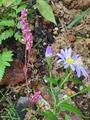 虫と実と花