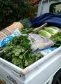 🎵野菜の買い出し❕